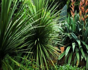 Tropical flax