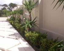 Narrow garden with Yucca